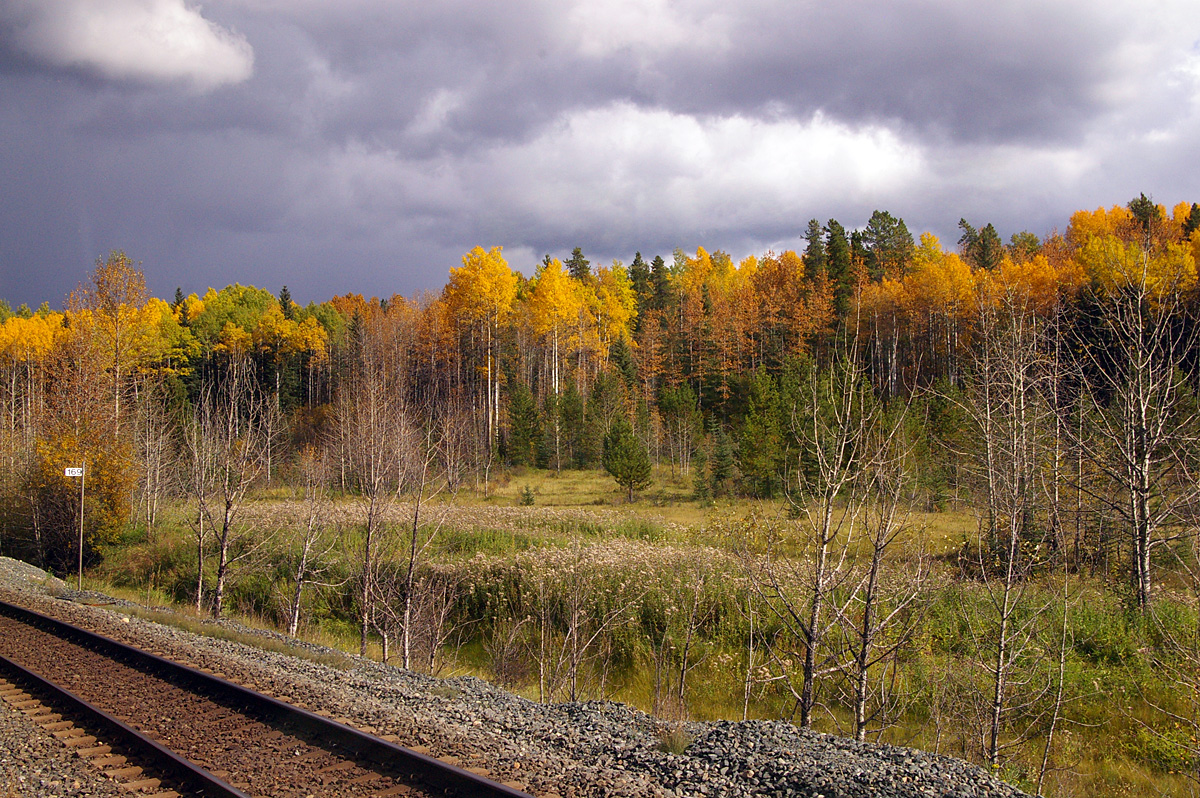 Fall colors from the train